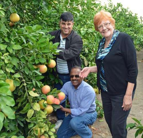Retired scientist ignites 'Orange revolution' to fight citrus greening