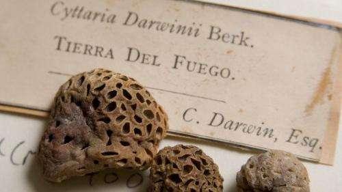 Revolutionising the Fungarium - a genomic treasure trove?