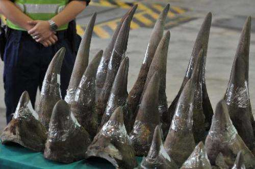 Rhinoceros horns in Hong Kong's Customs and Excise Department Offices on November 15, 2011