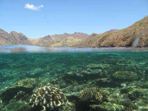 Saving Fiji's coral reefs linked to forest conservation upstream