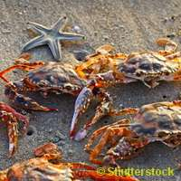 Science devises ways to recycle crustacean shells