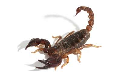 Scorpions take sting out of pain