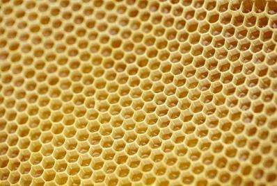 Secrets of bee honeycombs revealed