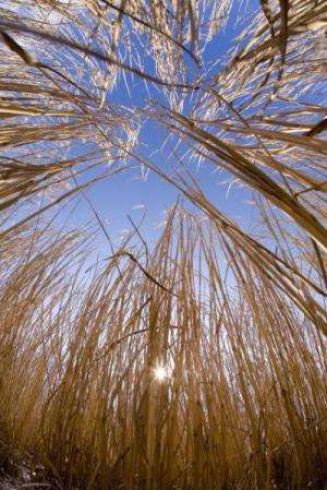 Sharing the risks/costs of biomass crops