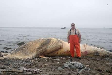Shoals tells whale tale with beached minke