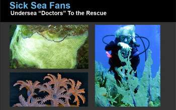 Sick Sea Fans: Undersea