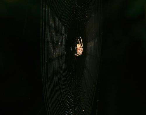 Spider webs more effective at ensnaring charged insects