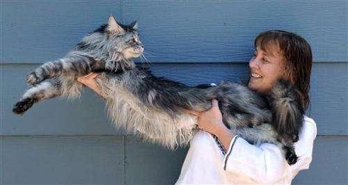 Stewie the world's longest cat dies in Nevada