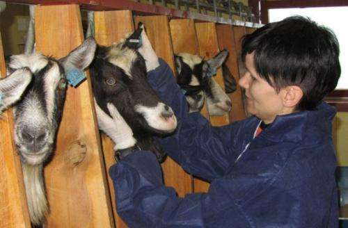 Stockmanship and animal welfare in the Norwegian dairy goat industry