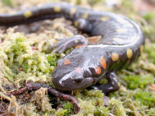 Study confirms US amphibian populations declining at rapid rate