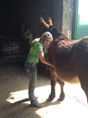 Study shines light on mules, their blood chemistry