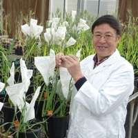 Superfast plant breeding slashes production times