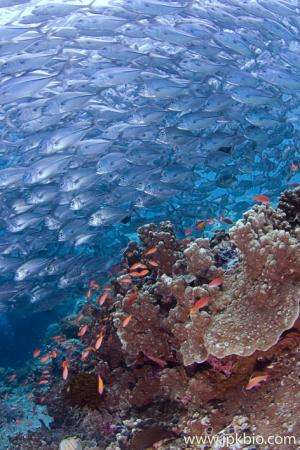 Taking over the oceans: adult fish characteristics predict a species' dispersal