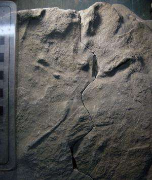 Tell-tale toes point to oldest-known fossil bird tracks from Australia