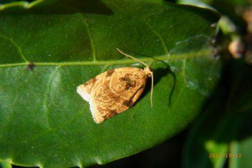 Temperature alters population dynamics of common plant pests