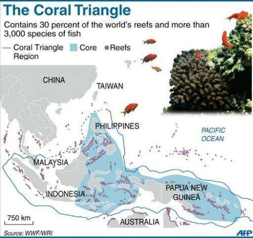 The Coral Triangle that covers Indonesia, the Philippines and Papua New Guinea