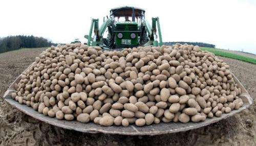 The EU's second highest court Friday annulled a European Commission decision to authorise a genetically modified potato develope