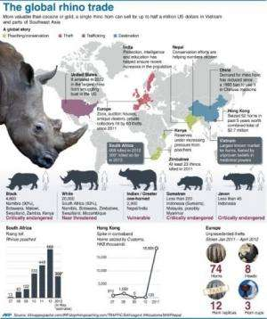 The global rhino trade