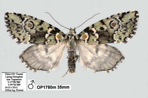 The sun moth: A beautiful new species Stenoloba solaris from China