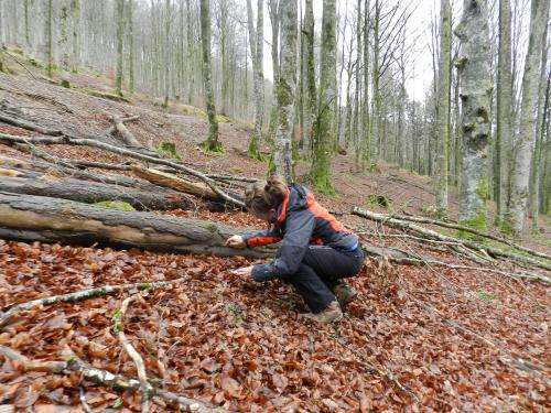 Traditional forest management reduces fungal diversity