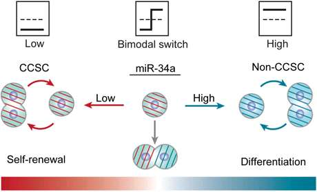 Turn out the light: 'Switch' determines cancer cell fate