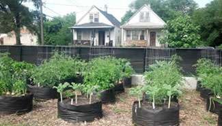 Urban agriculture: The potential and challenges of producing food in cities