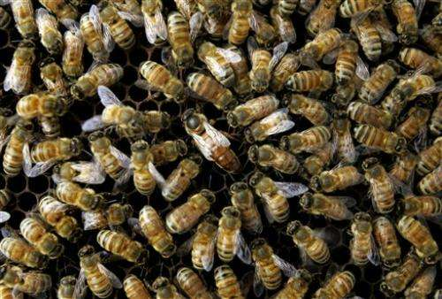 US: Many causes for dramatic bee disappearance