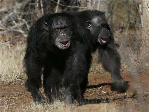 US to retire most chimps from medical research