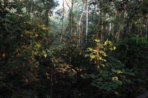 View of the Amazon forest at Amacayacu National Park, in Guaviare, Colombia on August 19, 2010