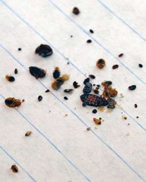 War on bugs: University of Cincinnati research could lead to better bed bug control