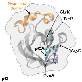 Watching a protein as it functions