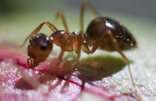 We've been looking at ant intelligence the wrong way