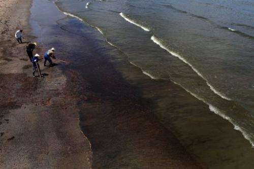 Workers hired by BP clean oil off the beach in a contaminated area on June 12, 2010 in Grand Isle, Louisiana