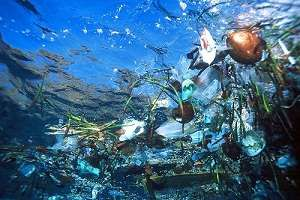World's plastic devoured by ocean organism