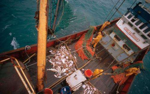 WWF calls for satellite technology on all commercial vessels to increase transparency of fishing activities