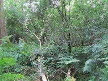 Wytham Woods 'shields local plants'