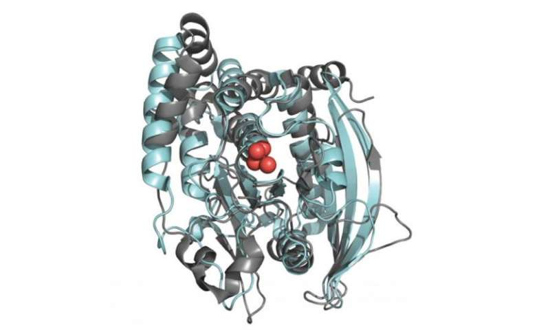 YopH and PTP1B Enzymes