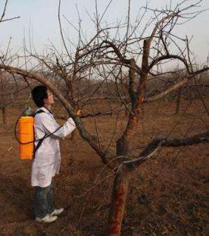 Zinc sulfate, sugar alcohol zinc sprays improve apple quality