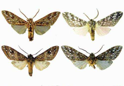 ZooKeys opens the gates to America's moth diversity
