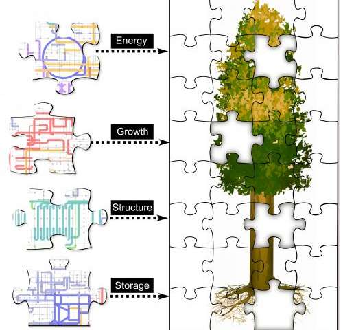 'Zoomable' map of poplar proteins offers new view of bioenergy crop