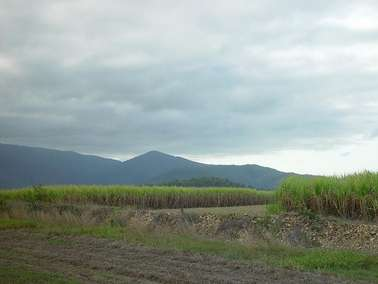 ASU professor studies impact of increased sugarcane production