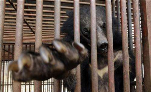 Bear bile-extracting farms near collapse in SKorea