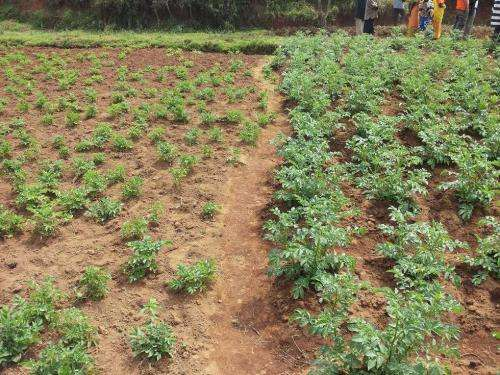 Burundi farmers teach each other how to farm more efficiently