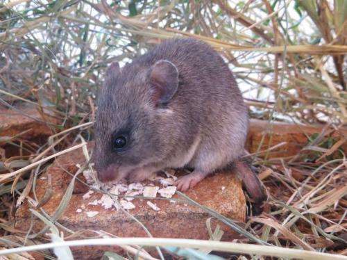 Decrease in large wildlife drives an increase in rodent-borne disease and risk to humans