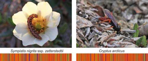 DNA barcodes change our view on how nature is structured