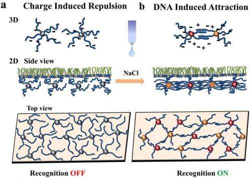 DNA-linked nanoparticles form switchable 'thin films' on a liquid surface