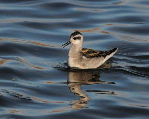Earlier snowmelt prompting earlier breeding of Arctic birds