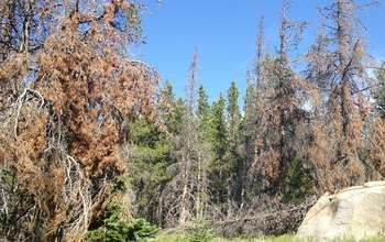 Earth Week: Bark beetles change Rocky Mountain stream flows, affect water quality