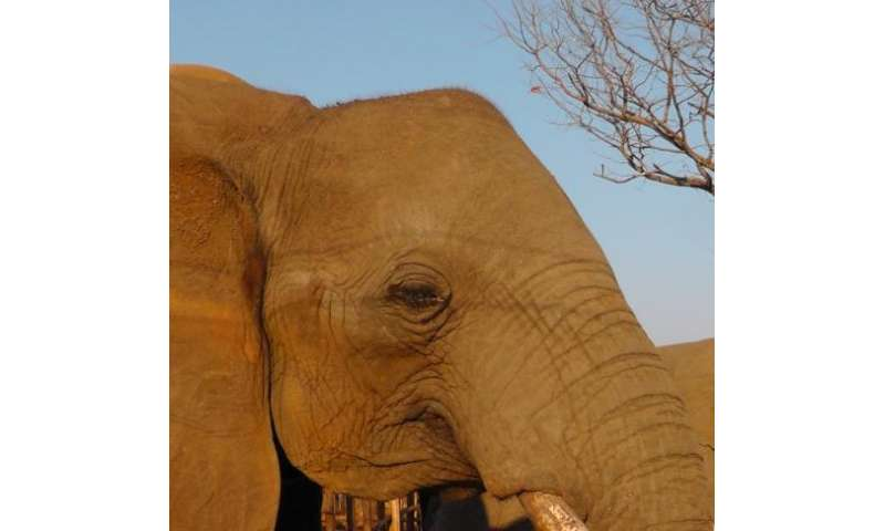 Elephants are sensitive and very social, but there is no evidence they cry