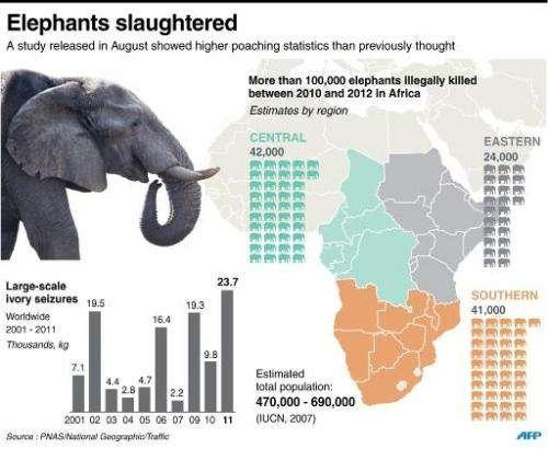 Elephants slaughtered